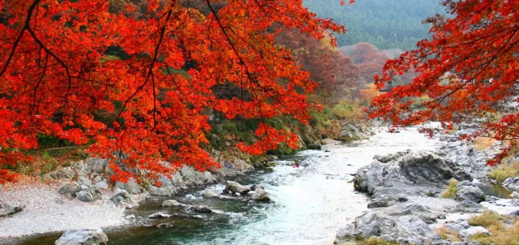 【2018日本楓葉季】一起徜徉在窒息艷紅美景裡吧!10大日本賞楓景點懶人包