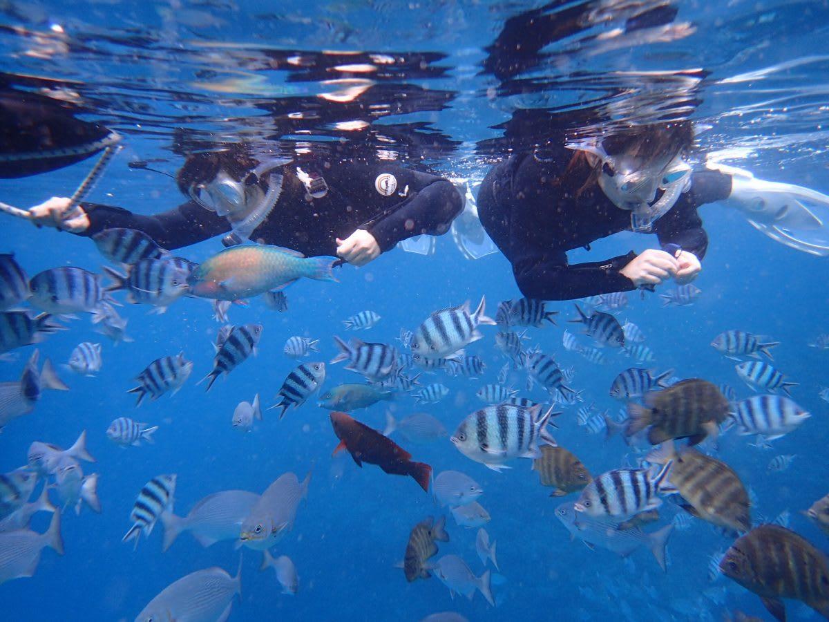 享受在湛藍海洋中被魚群包圍的樂趣