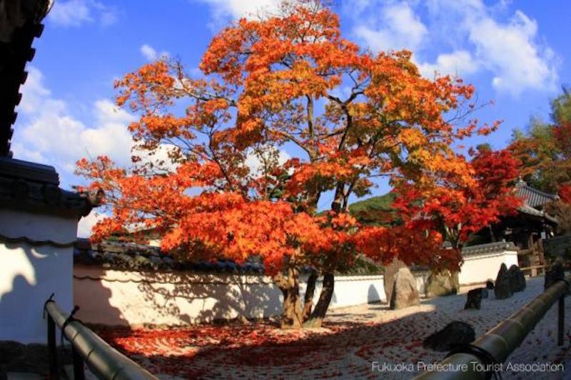 光明禪寺 來源:福岡縣觀光聯盟