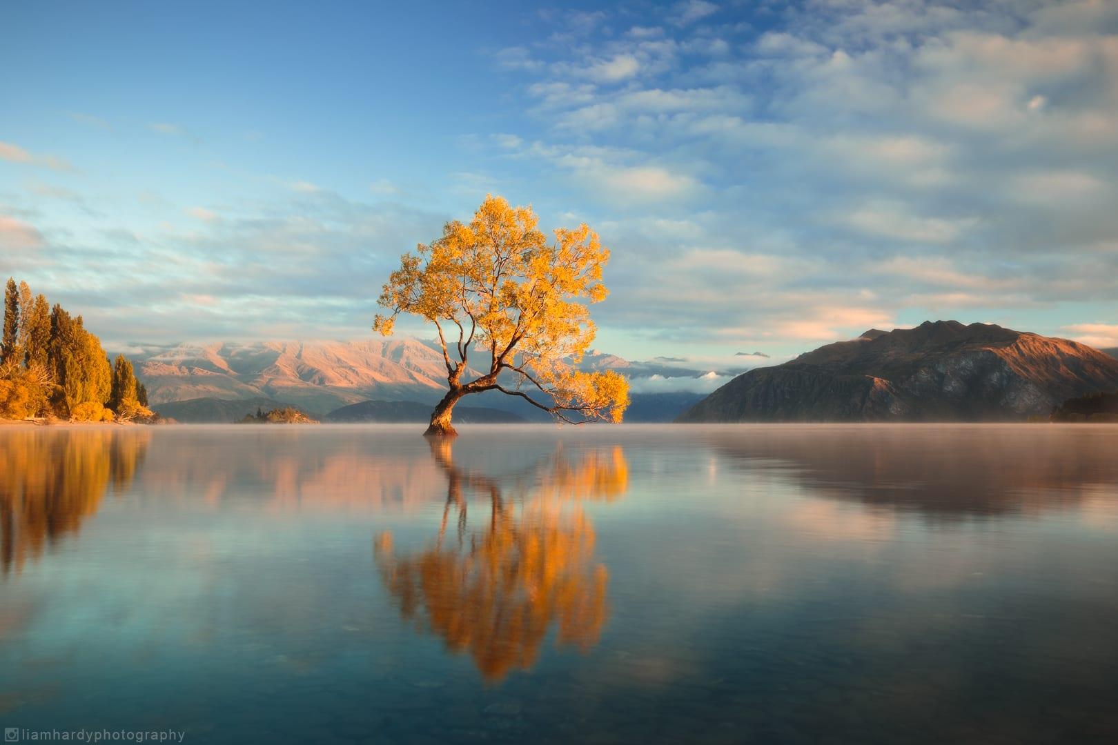 捕捉最美孤樹的身影,圖片取自rebrn.com。