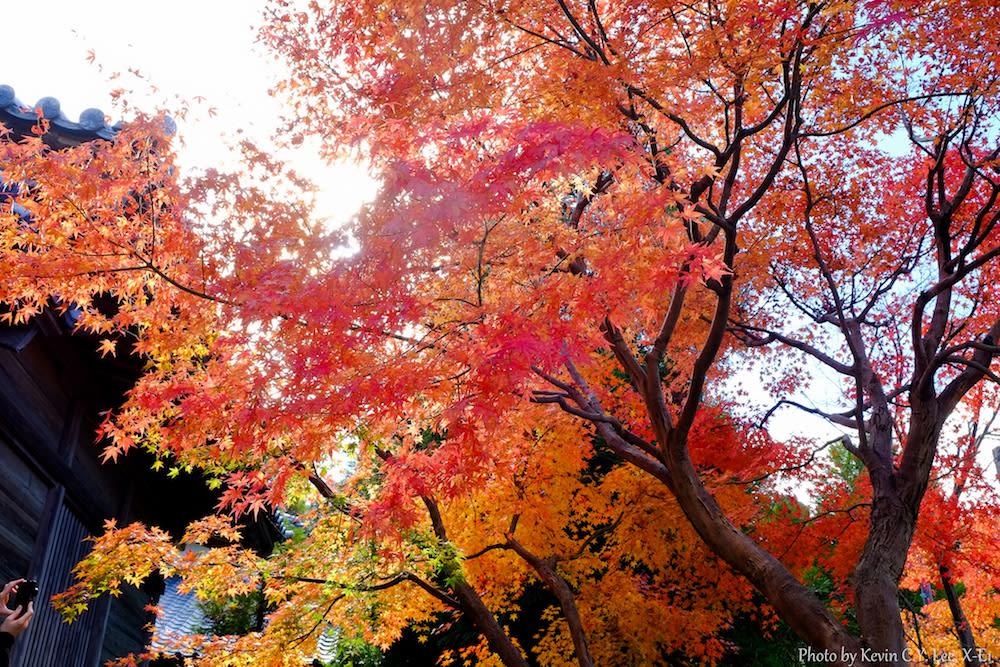太宰府天滿宮 來源:flickr@Kevin Lee