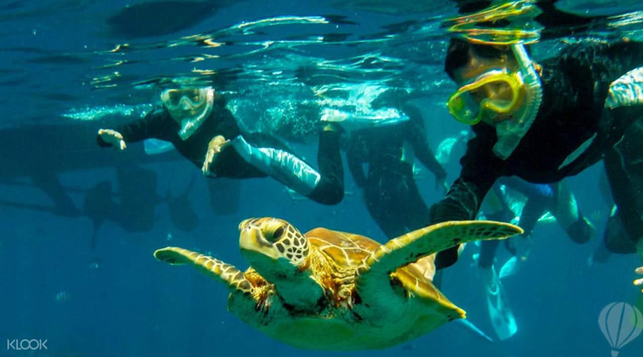 這輩子必去一次!10大亞洲潛水聖地 海底景色美到窒息 首推沖繩慶良間諸島