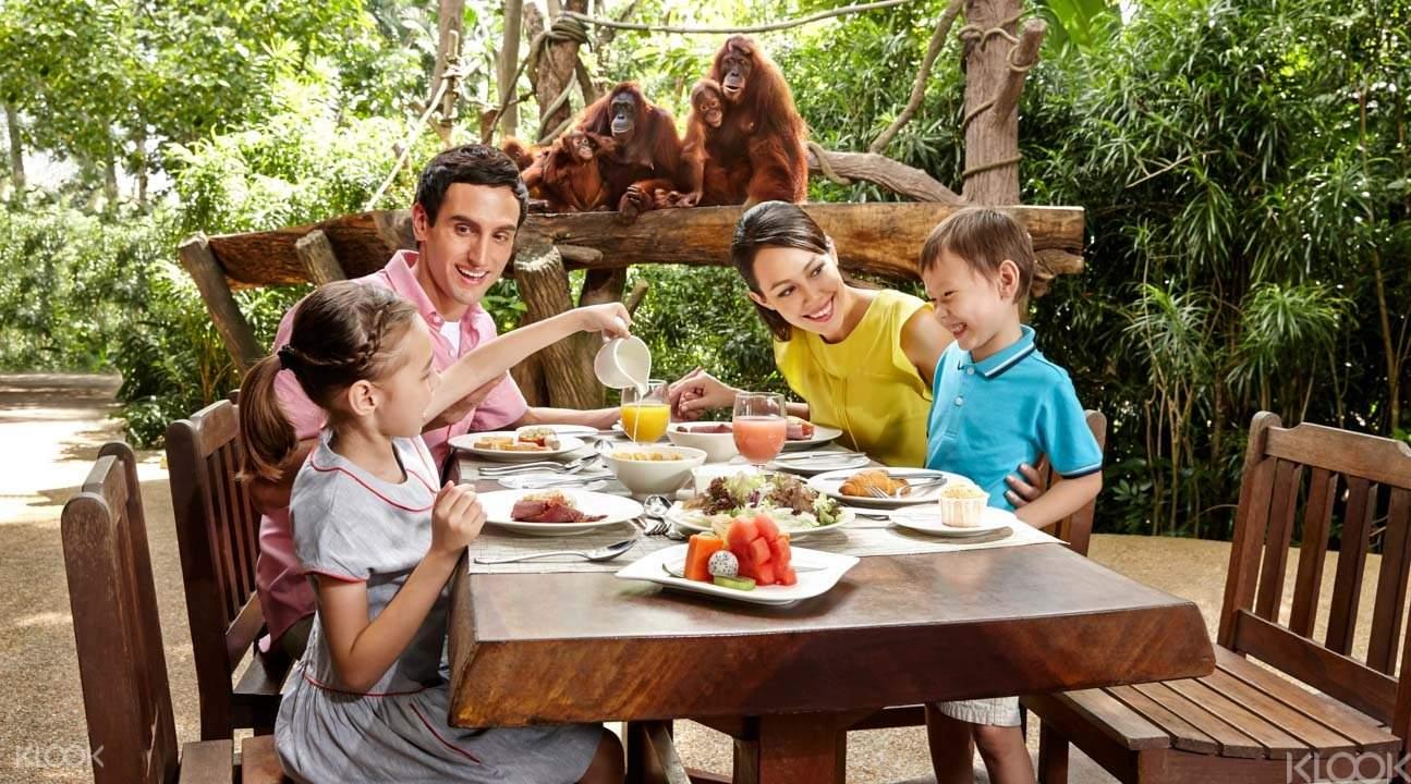 新加坡動物園 與紅毛猩猩共進早餐