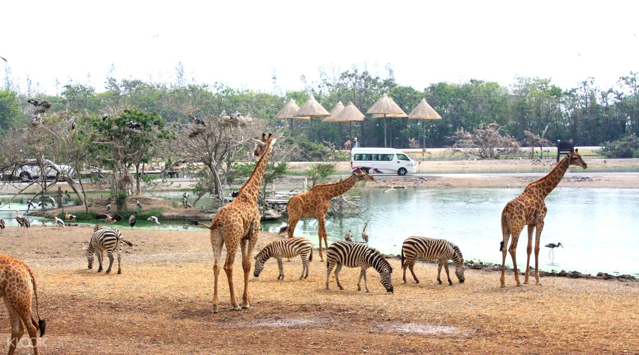 景點接送曼谷賽福瑞野生動物園(SafariWorld)往返接送