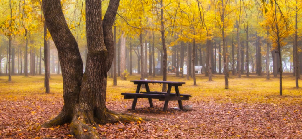 秋天的南怡島 來源:南怡島官網