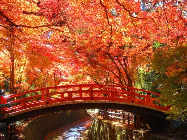 京都的北野天滿宮~小橋流水的楓景。(圖片取自www.rurubu.com)