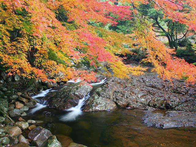 滑床溪谷的亮滑花崗岩與漸紅的楓葉互相映襯。(圖片取自www.rurubu.com)