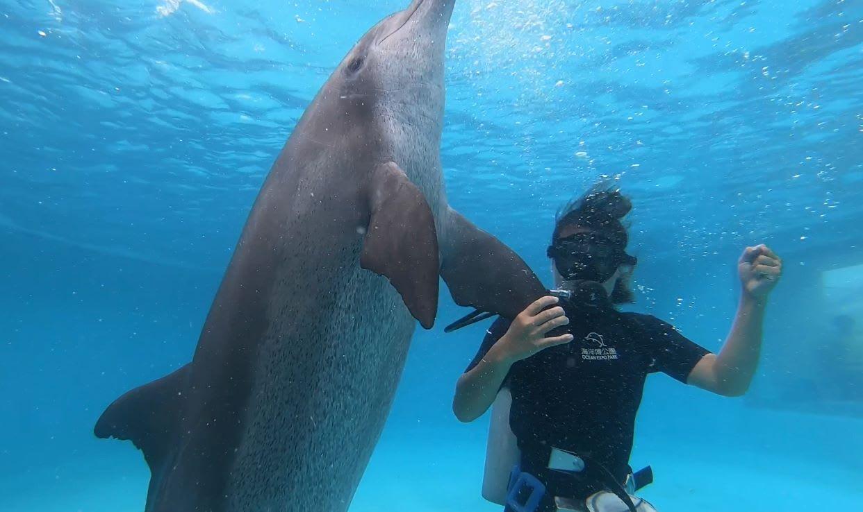 潛水員秀 來源:fb@kaiyohaku.churaumi