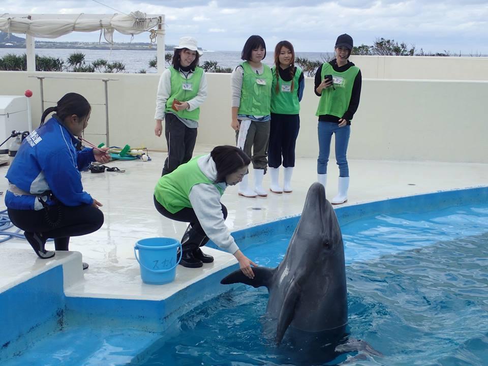 海豚觀察會 親手餵海豚 來源:fb@kaiyohaku.churaumi