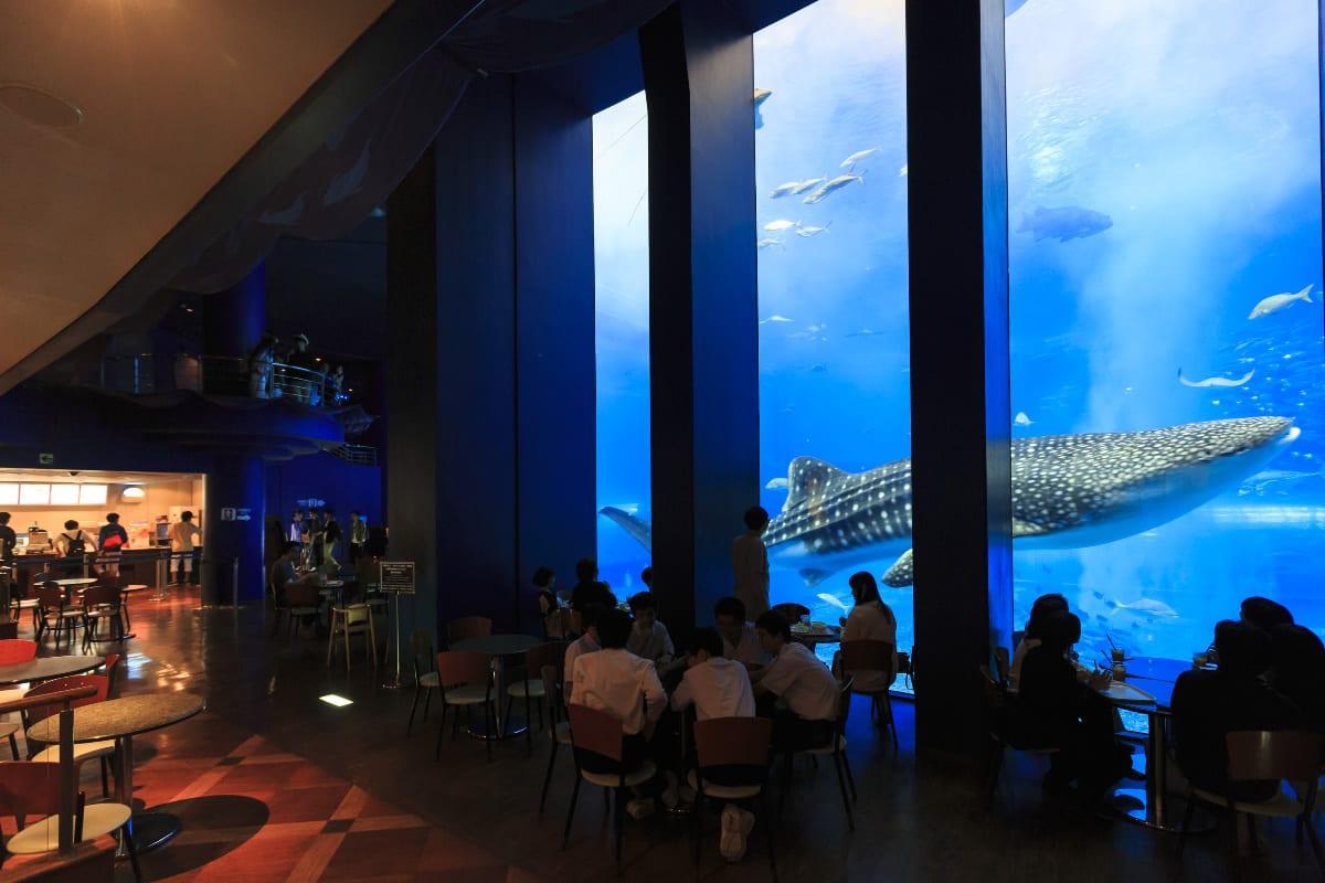 Ocean Blue 和鯨鯊近距離用餐 來源:fb@kaiyohaku.churaumi