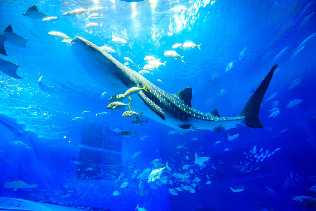 【沖繩自由行】沖繩美麗海水族館全攻略!門票、交通、設施、餐廳懶人包