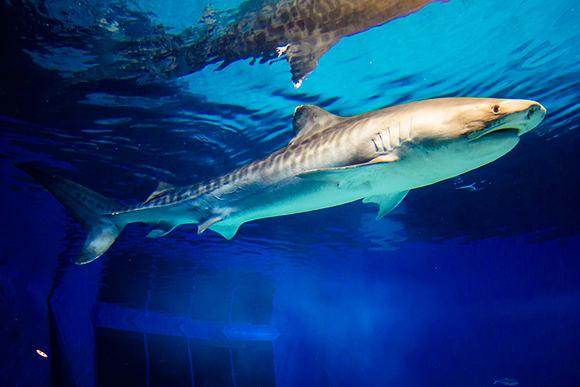 鯊魚博士展廳 來源:官網