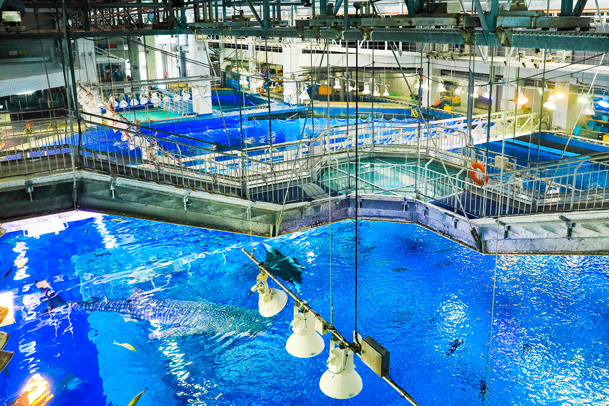 黑潮之海 水上遊覽 來源:官網