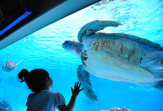海龜館 來源:官網