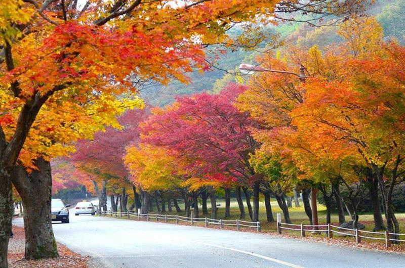 【2018韓國賞楓全攻略】紅黃交織的楓葉、銀杏秘境,秋季韓國必遊景點一篇搞定!