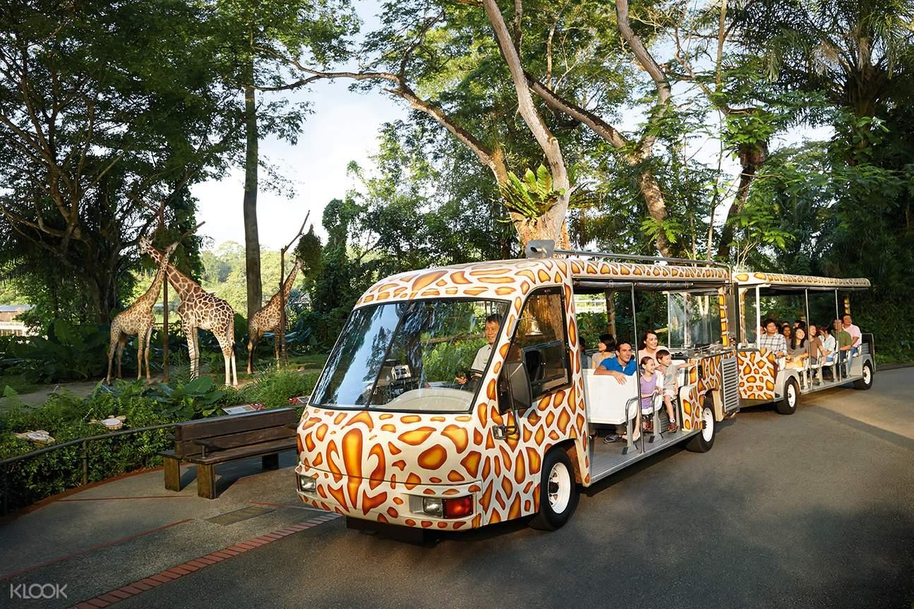 遊園專車取代步行,輕鬆遊覽整個動物園。