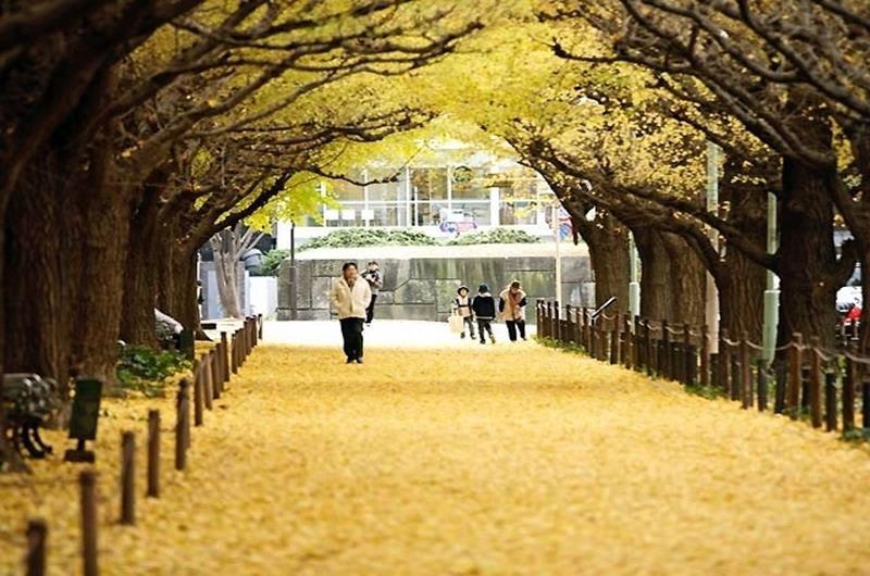 明治神宮外苑(照片來源:jorudan.co.jp官網)https://goo.gl/Apbm0q