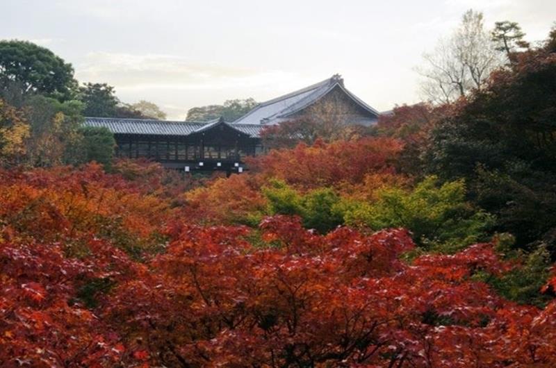 東福寺(照片來源:jorudan.co.jp官網)https://goo.gl/Apbm0q