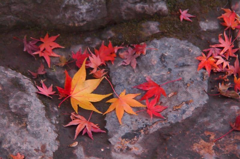 高台寺的落葉(照片來源:Kodaiji官網)http://www.kodaiji.com/