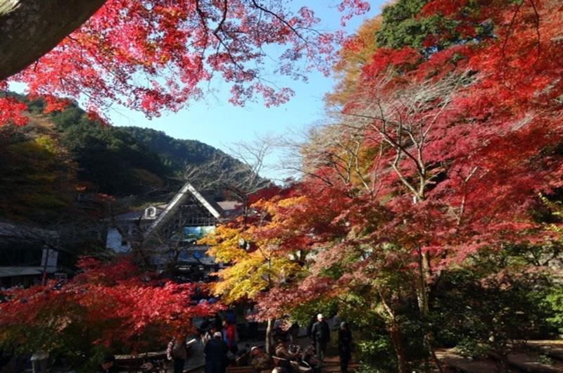 高尾山(照片來源:jorudan.co.jp官網)https://goo.gl/Apbm0q