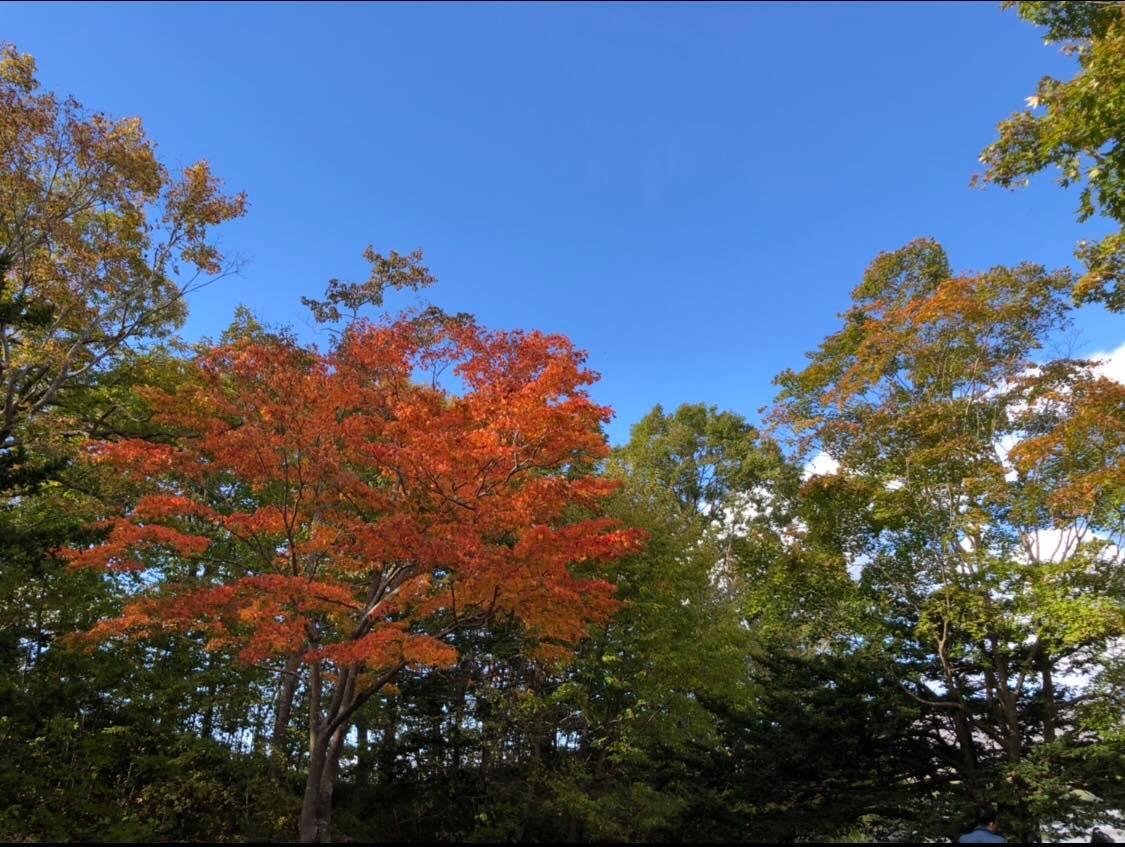 【2018北海道楓葉季】來過絕對想再來!秋楓配上溫泉、美食 北海道賞楓攻略