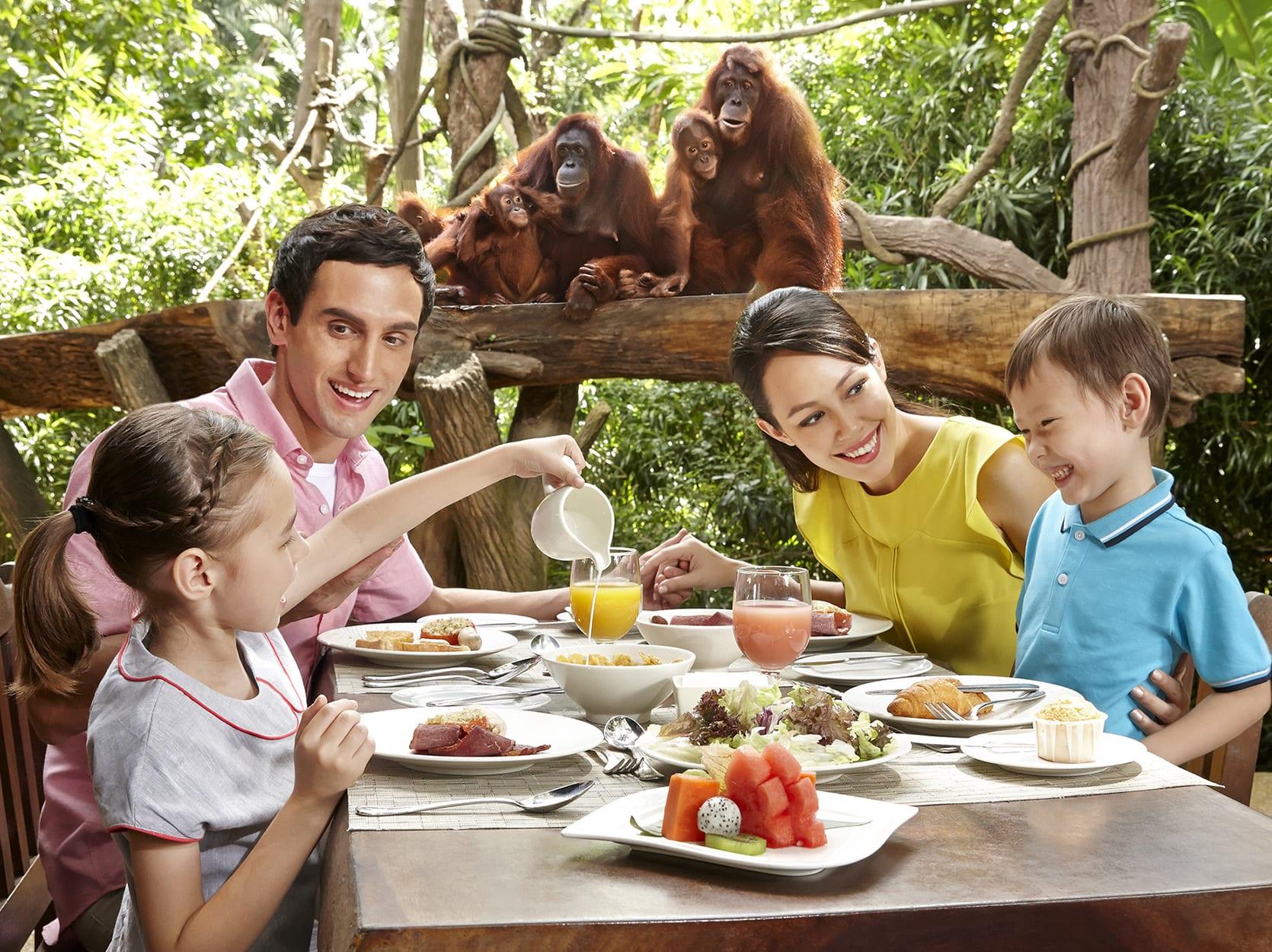 和紅毛猩猩一起共享早餐時光。(圖片取自新加坡動物園官網)