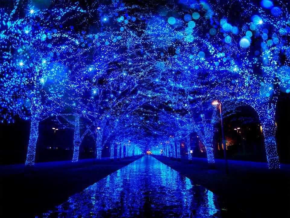 代代木公園青の洞窟 來源:fb @aodo.jp