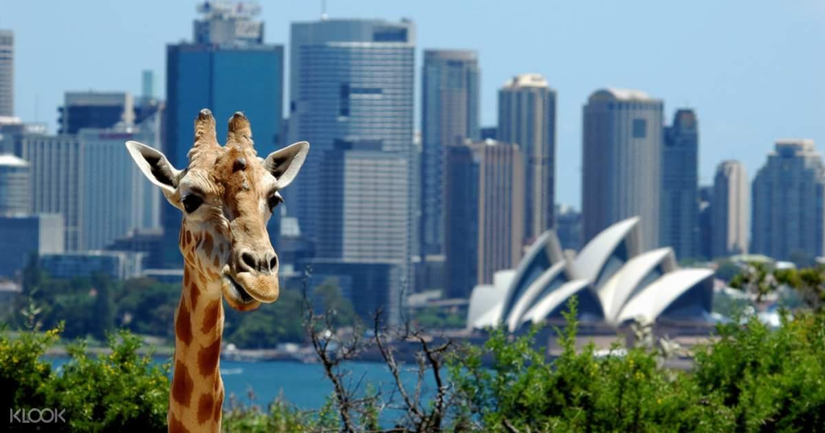 塔龍加動物園,照片來源:KLOOK
