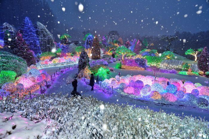 晨靜樹木園燈節 來源:韓國觀光公社