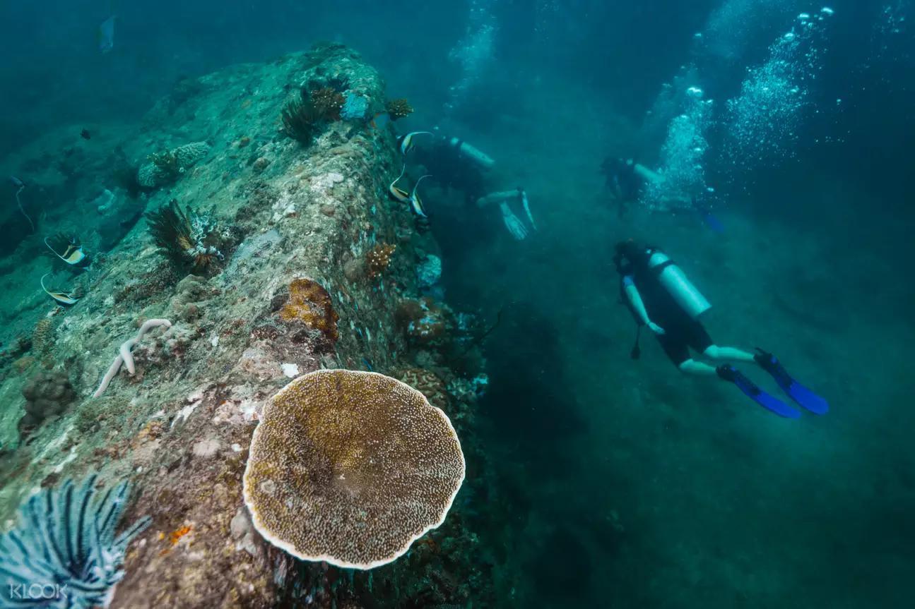 麗貝島深潛