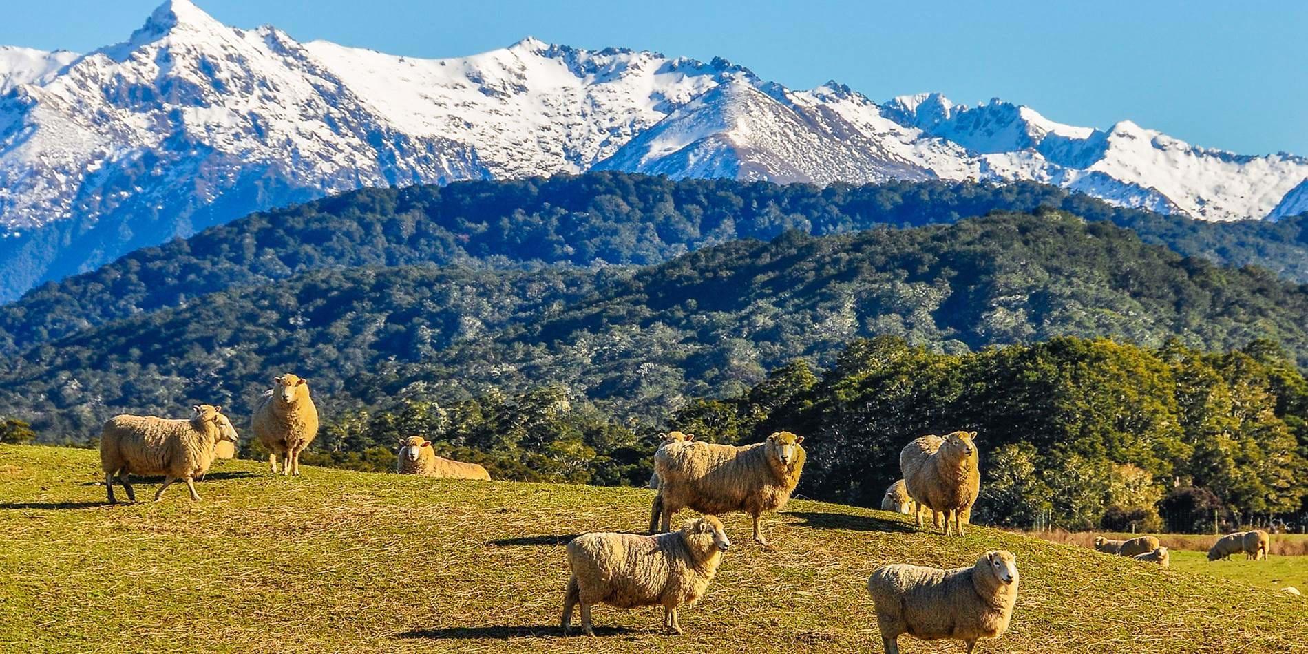 紐西蘭,圖片取自www.kilroy.net。