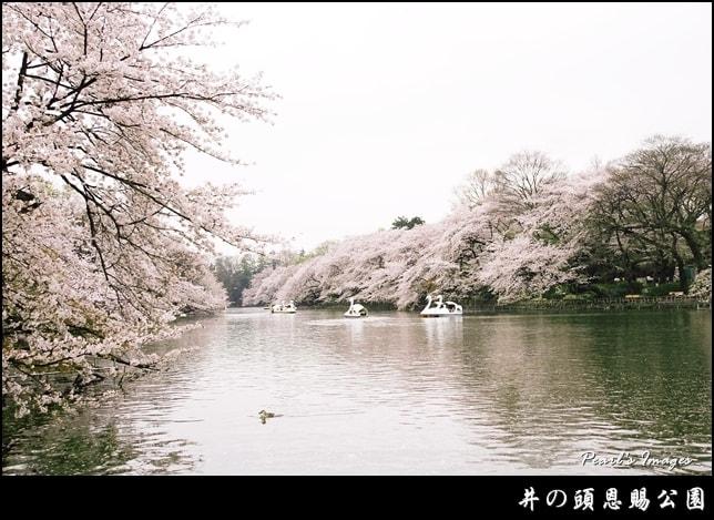井之頭恩賜公園,Flickr授權作者Pearl Hsieh,http://t.cn/EqXBJnI
