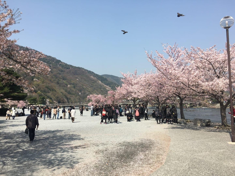 渡月橋是春季賞櫻、秋季賞楓勝地,優雅的造型與自然景色和諧融洽