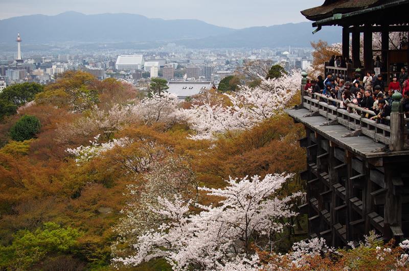 京都清水寺花期大約落在3月27日開花(照片來源:othree@Flickr)https://bit.ly/2CjFq75