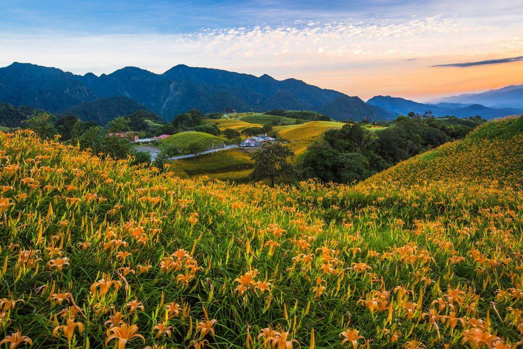 六十石山金針花季 來源:花東縱谷國家風景區