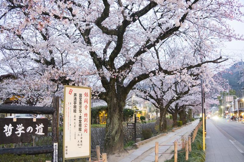哲學之道是2019年由網友熱推出來的京都最佳賞櫻景點(照片來源:Perry Li@Flickr))https://bit.ly/2Tapefi