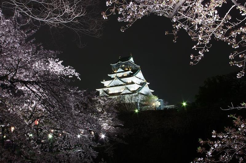大阪城夜櫻(照片來源:Wikipedia)