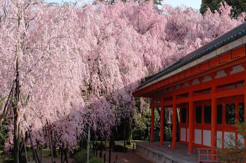 平安神宮(照片來源:平安神宮官網)http://www.heianjingu.or.jp/