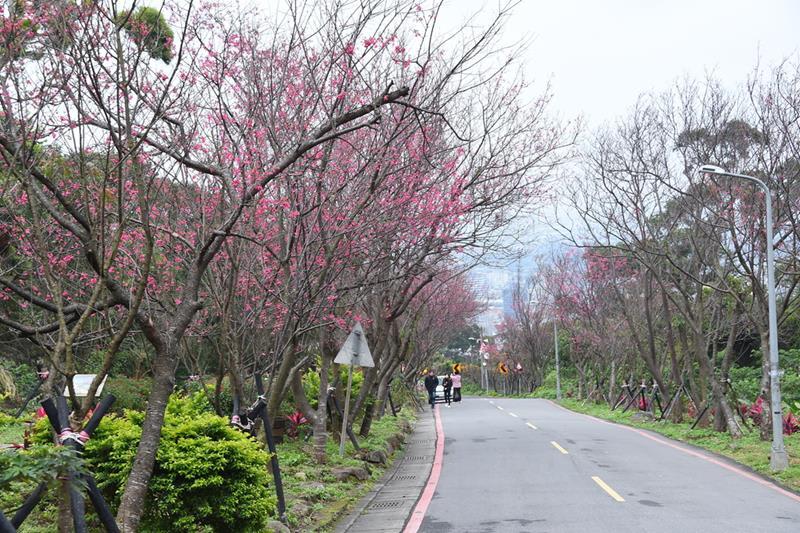 復興三路櫻花隧道〈照片來源:台北市政府觀光傳播局〉