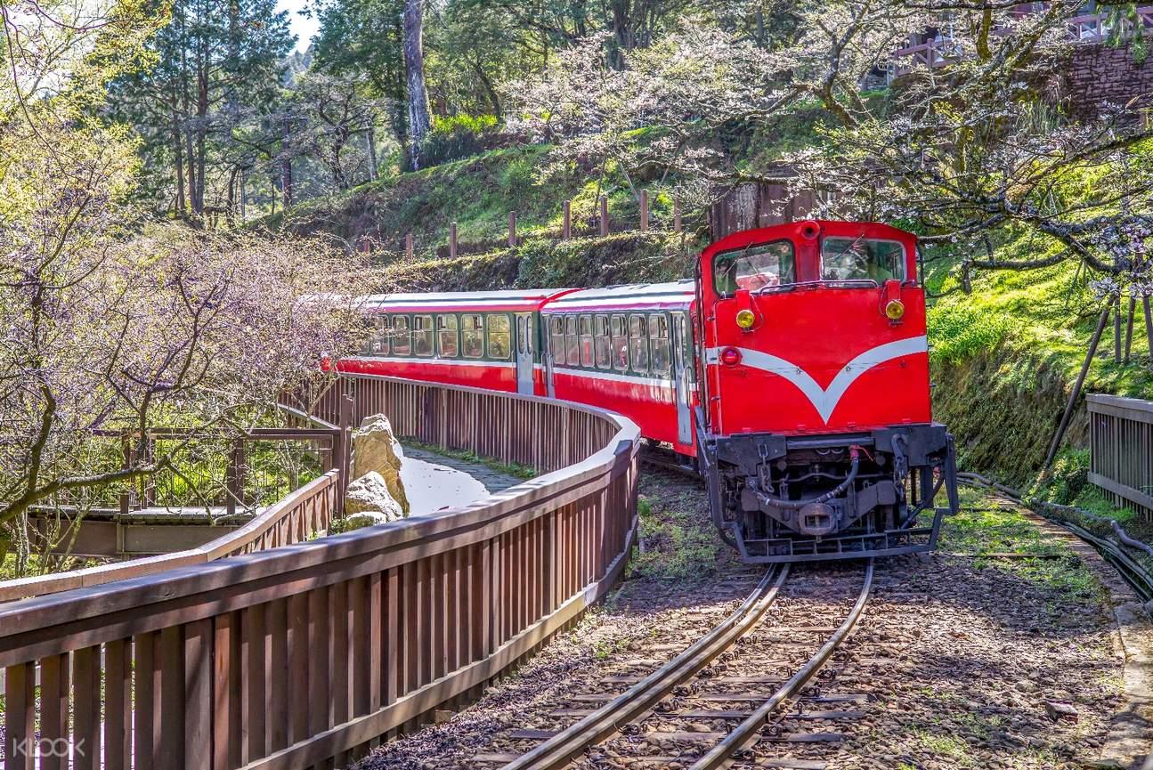 搭乘阿里山小火車,沿途欣賞盛開的櫻花