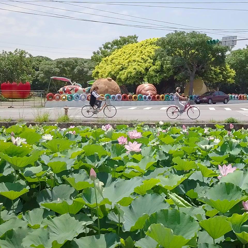 桃園觀音蓮花季 來源:fb @lotus.guanyin