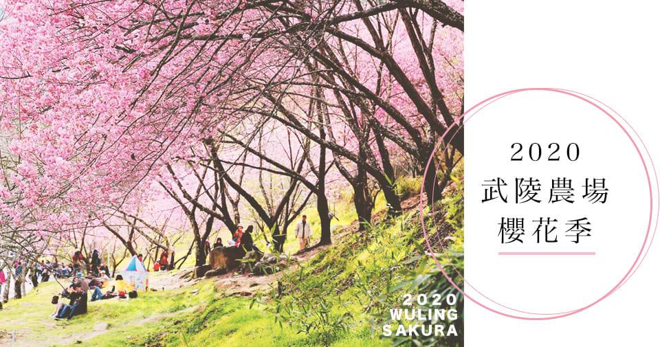 武陵農場櫻花季cover