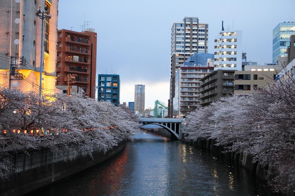 目黑川,Flickr授權作者班森,http://t.cn/EqX8kwn