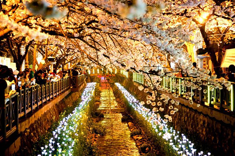 餘左川星光慶典(照片來源:KOREA TOURISM ORGANIZATION官網)https://bit.ly/2VGChXy
