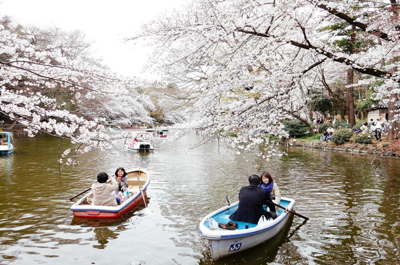 人們在井之頭恩賜公園划船賞櫻(照片來源:Dick Thomas Johnson@Flickr)https://bit.ly/2FBLNqe