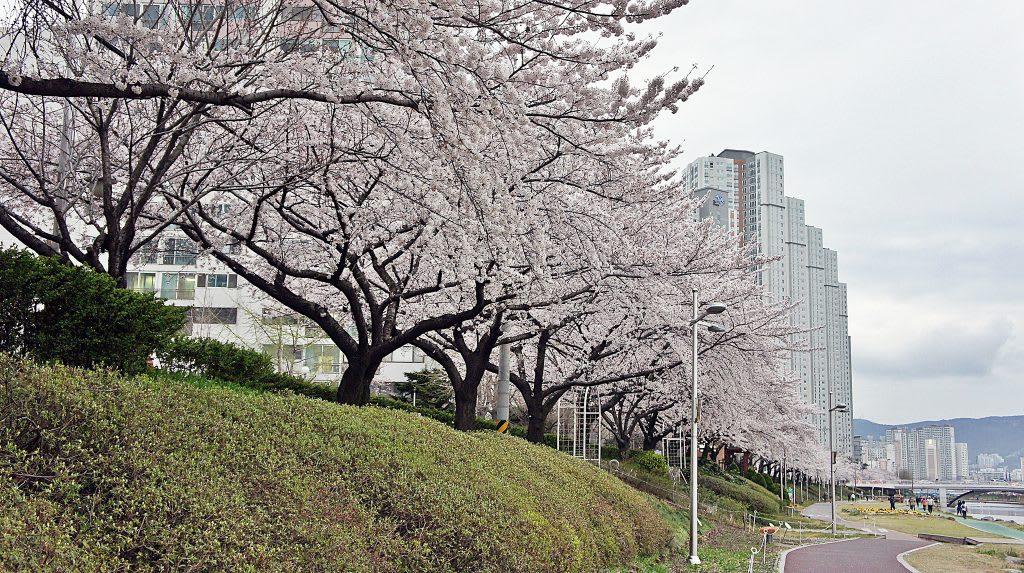 溫泉川市民公園 來源:flickr@Junoo Kim