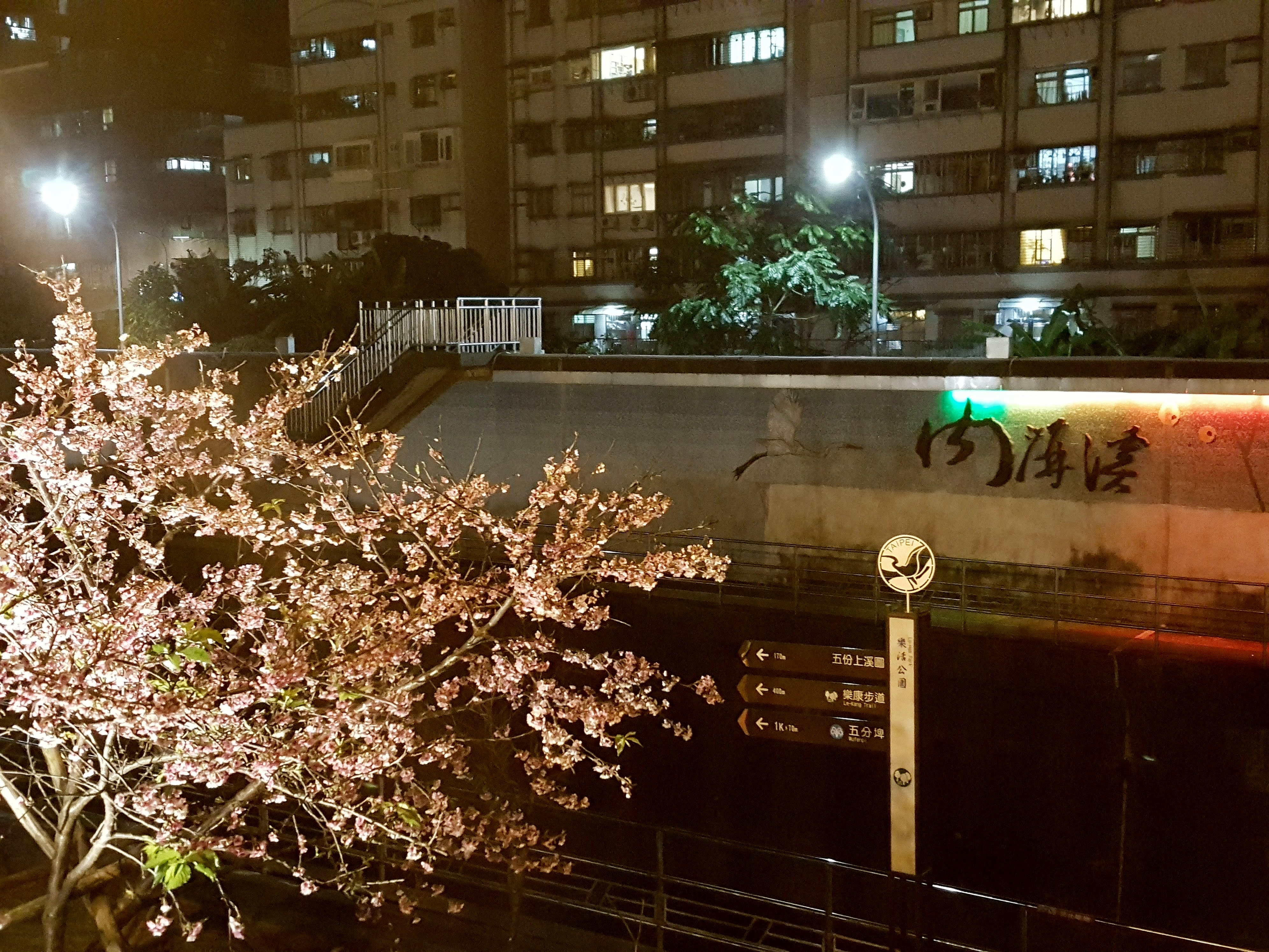 ▲ 內湖樂活公園-寒櫻