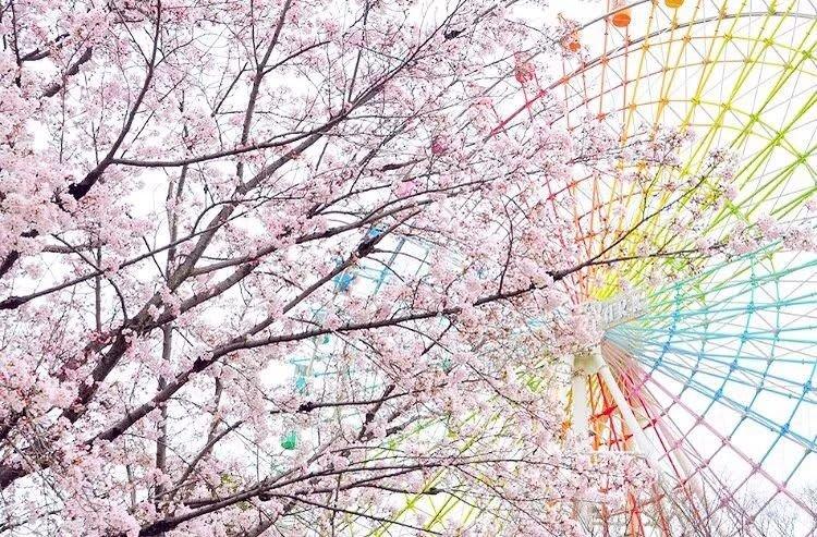 「枚方公園」可以賞櫻又可以玩遊樂設施。(圖片取自hirakatapark @ Instagram)
