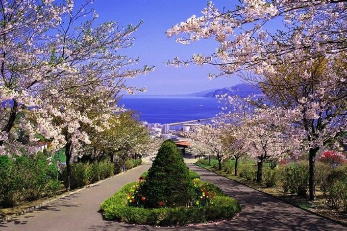 【2019櫻花季】日本北海道櫻花景點懶人包!交通、景點、時間一篇搞定