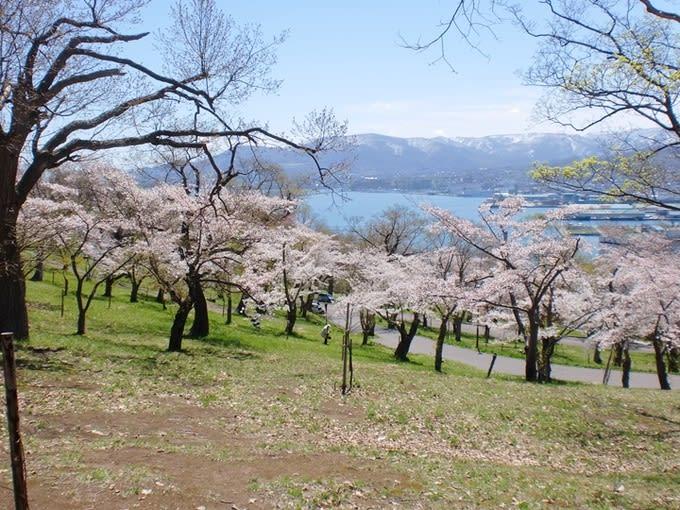 海天一色的櫻花美景令人心曠神怡。(圖片取自www.hokkaidolikers.com)